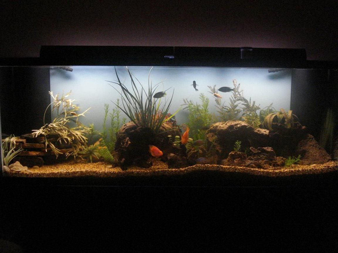 265 gallons freshwater fish tank (mostly fish and non-living decorations) - Hey, any questions or concerns?