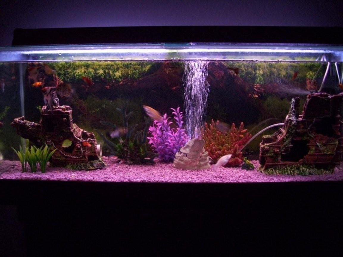 80 gallons freshwater fish tank (mostly fish and non-living decorations) - Fish are a little blurry! Dam Camera :)