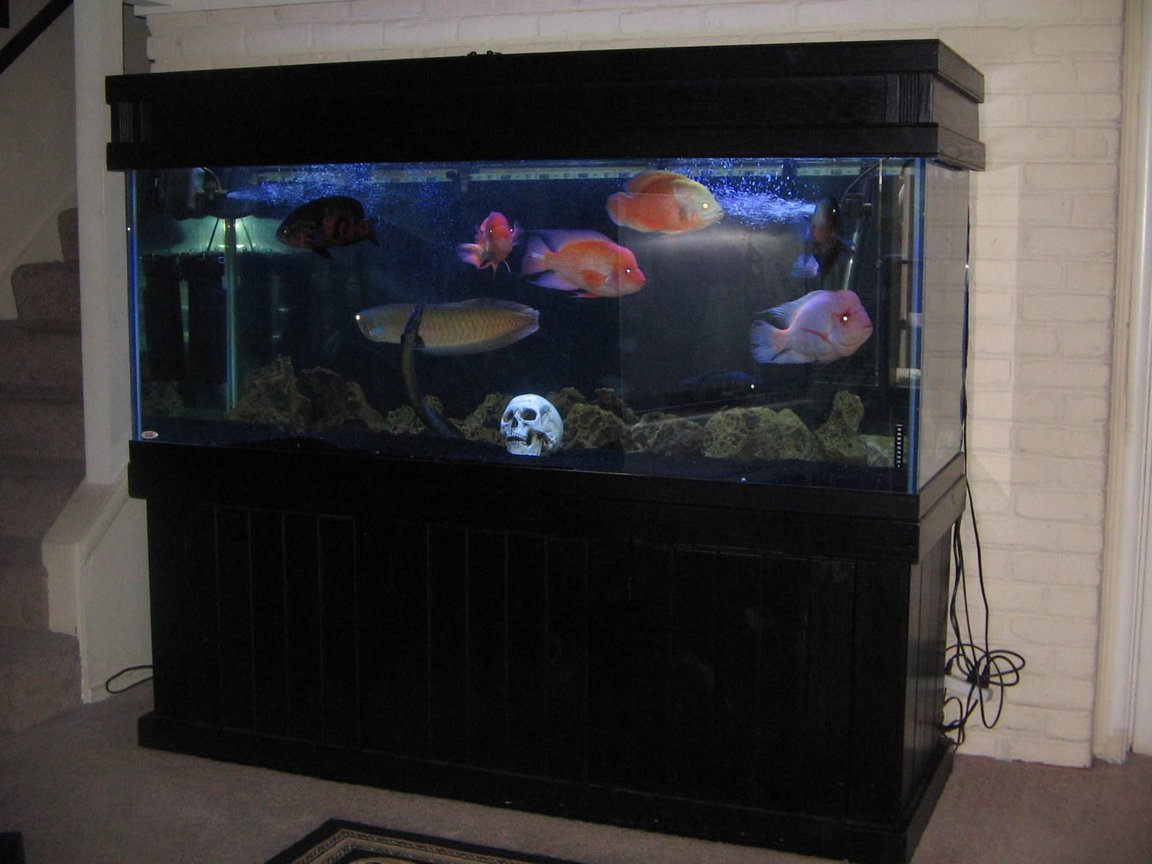 210 gallons freshwater fish tank (mostly fish and non-living decorations) - 210 south american tank