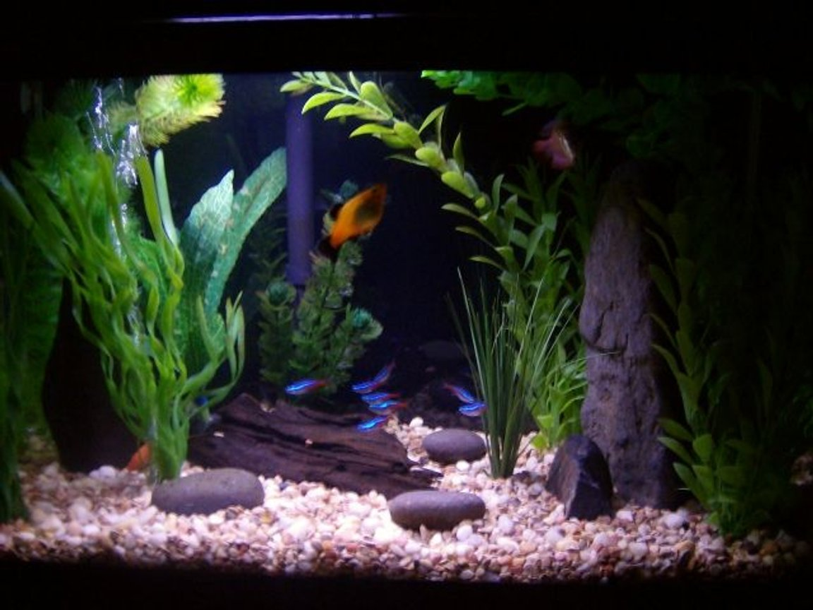 10 gallons freshwater fish tank (mostly fish and non-living decorations) - rerearangement