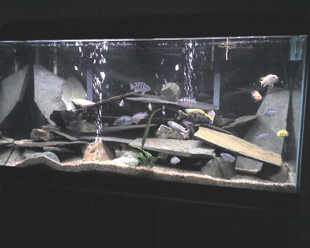 100 gallons freshwater fish tank (mostly fish and non-living decorations) - Tank#1
