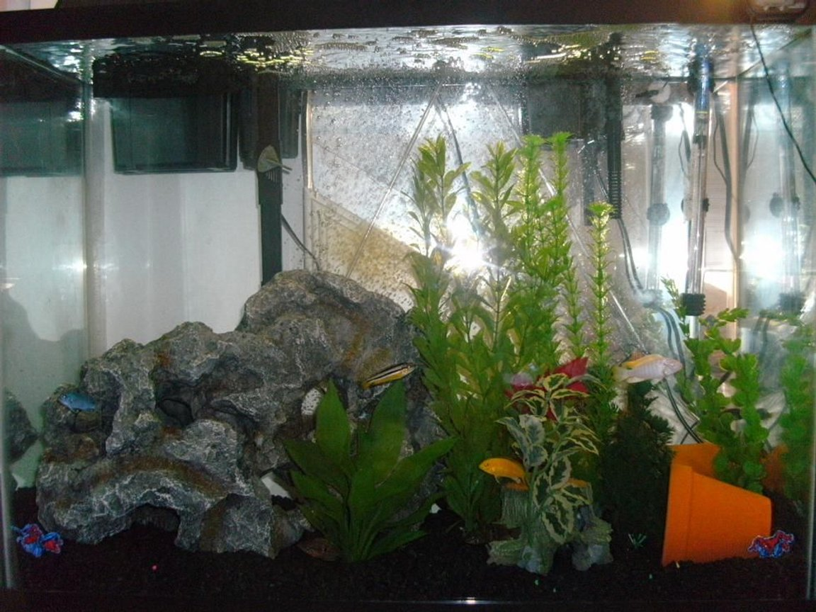40 gallons freshwater fish tank (mostly fish and non-living decorations) - 40 gallon(tall)