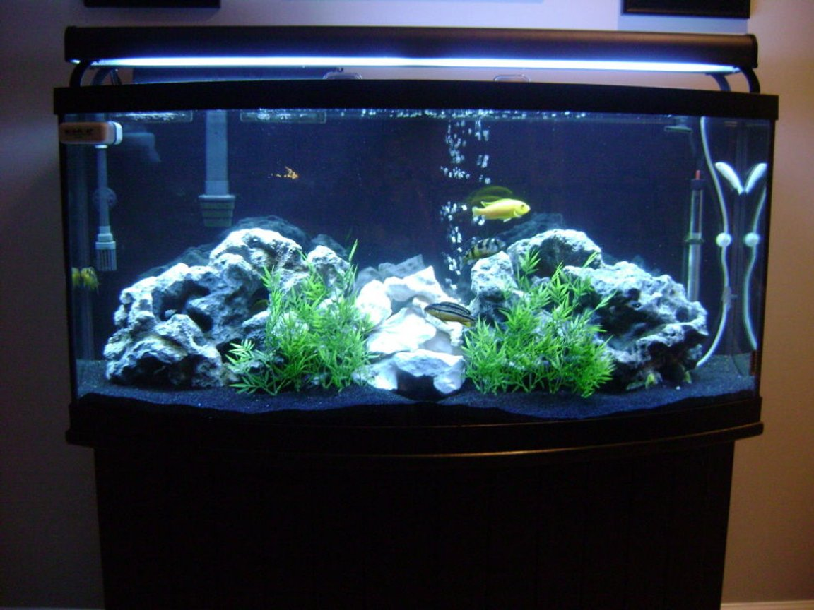 72 gallons freshwater fish tank (mostly fish and non-living decorations) - 72 Gallon African Cichlid Tank.
