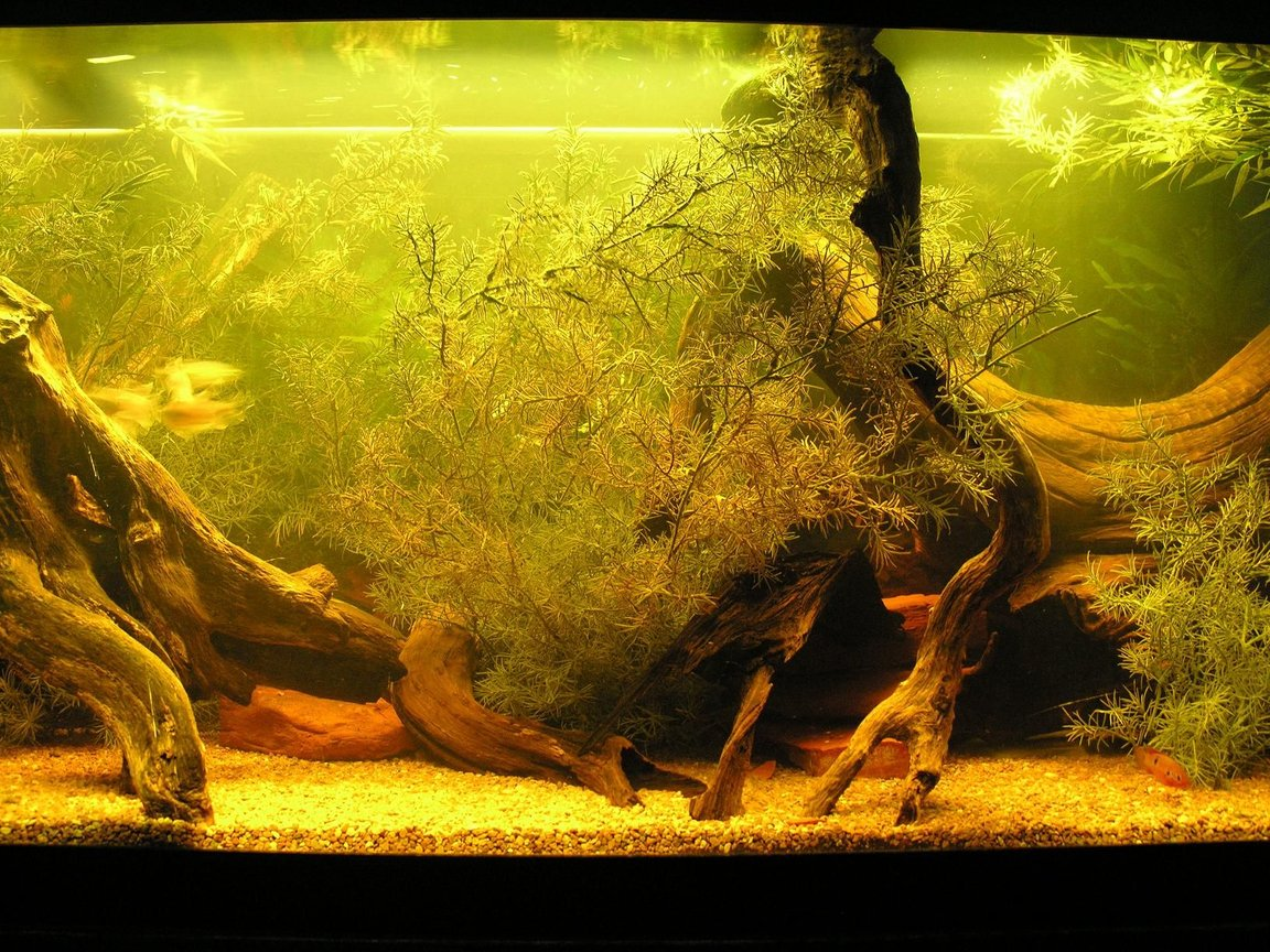 120 gallons freshwater fish tank (mostly fish and non-living decorations) - centre section