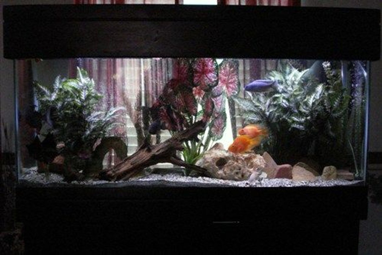 55 gallons freshwater fish tank (mostly fish and non-living decorations) - My tank
