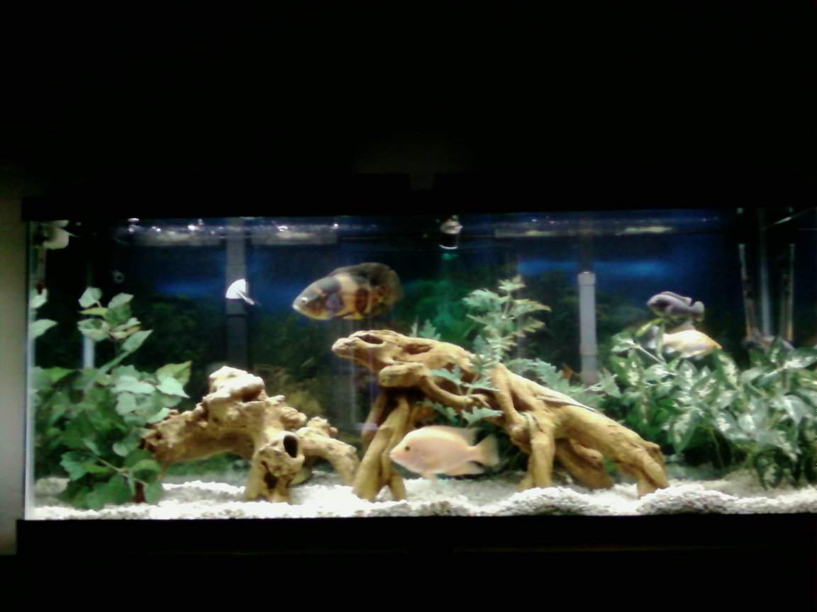 55 gallons freshwater fish tank (mostly fish and non-living decorations) - another one
