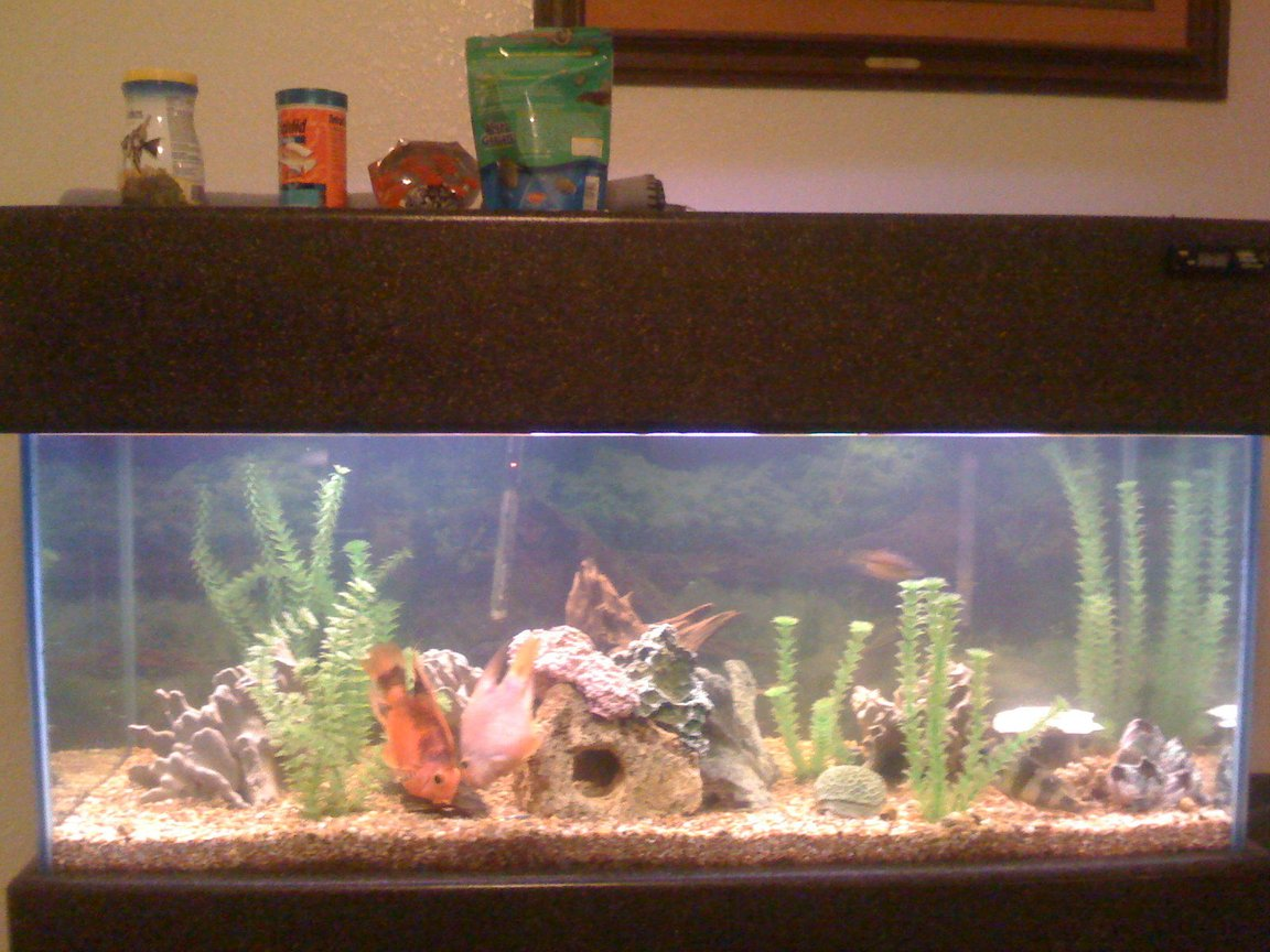 75 gallons freshwater fish tank (mostly fish and non-living decorations) - My 75