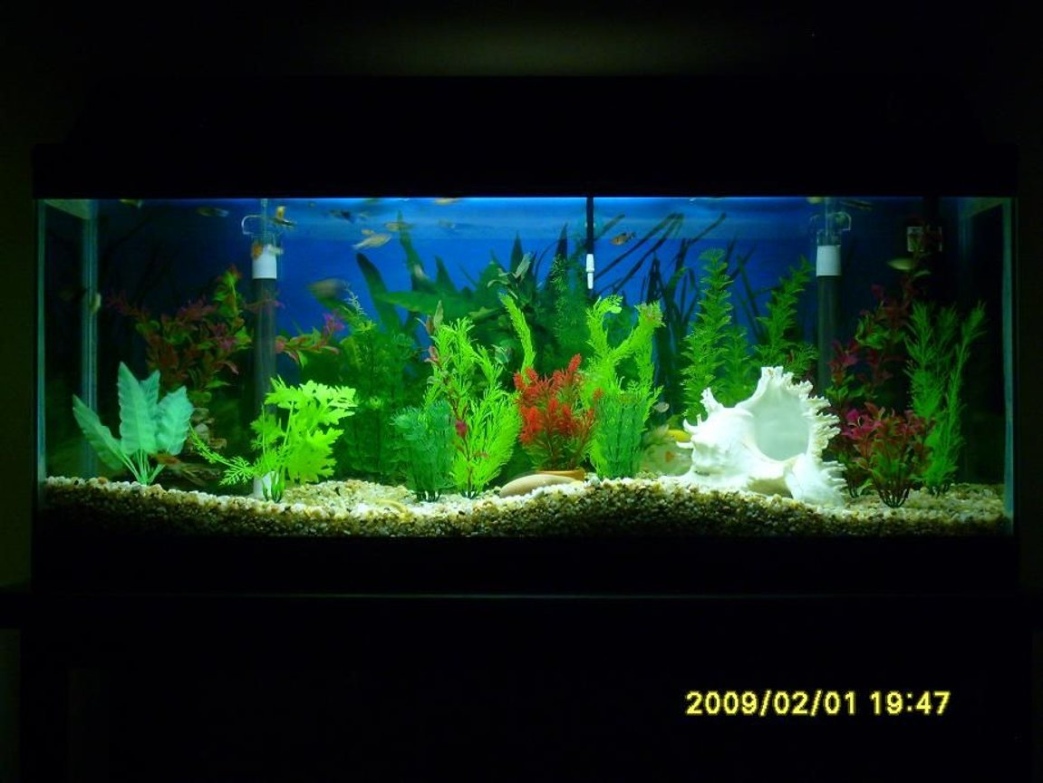 28 gallons freshwater fish tank (mostly fish and non-living decorations) - My Fishtank #2a