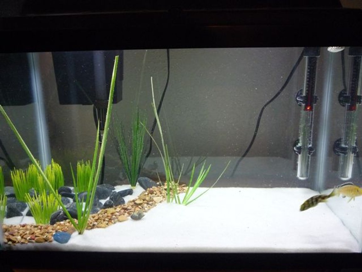 125 gallons freshwater fish tank (mostly fish and non-living decorations) - my 10 gallon tank that holds a few of the fish that will be in my 125 gallon tank when it is ready 2 Venustus Cichlids 1 Electric Yellow Cichlid 1 Green Spotted Puffer 1 Albino Bushy Nose Pleco