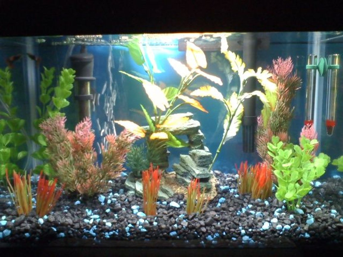 5 gallons freshwater fish tank (mostly fish and non-living decorations) - Freshwater 5GL Tank. 3 weeks old Starter fish only