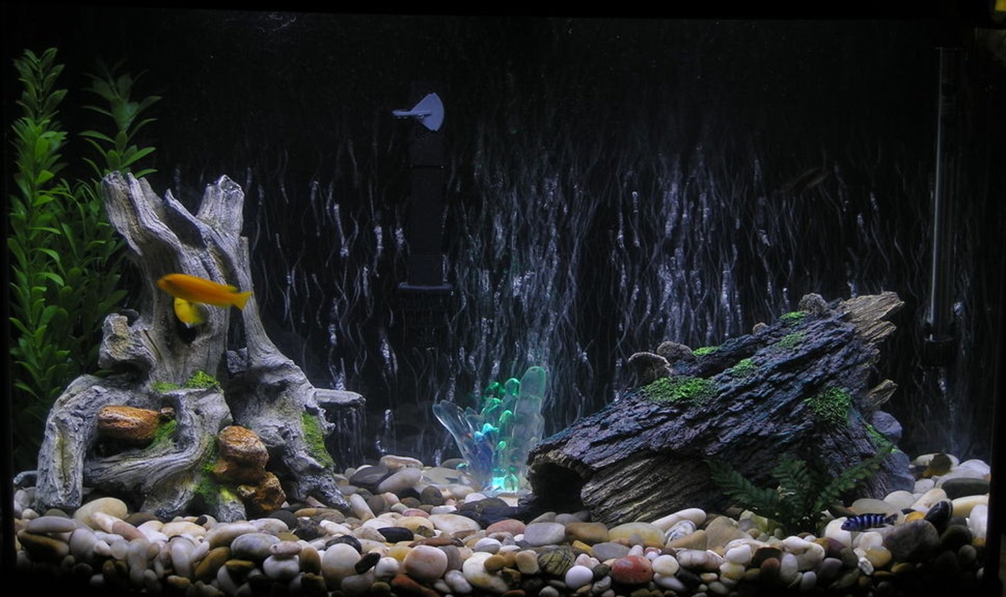 36 gallons freshwater fish tank (mostly fish and non-living decorations) - An ok pic of my tank