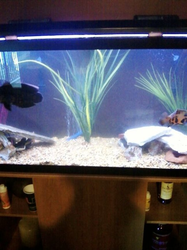 90 gallons freshwater fish tank (mostly fish and non-living decorations) - rearranged