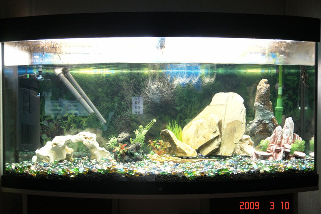 55 gallons freshwater fish tank (mostly fish and non-living decorations) - vision tropical tank