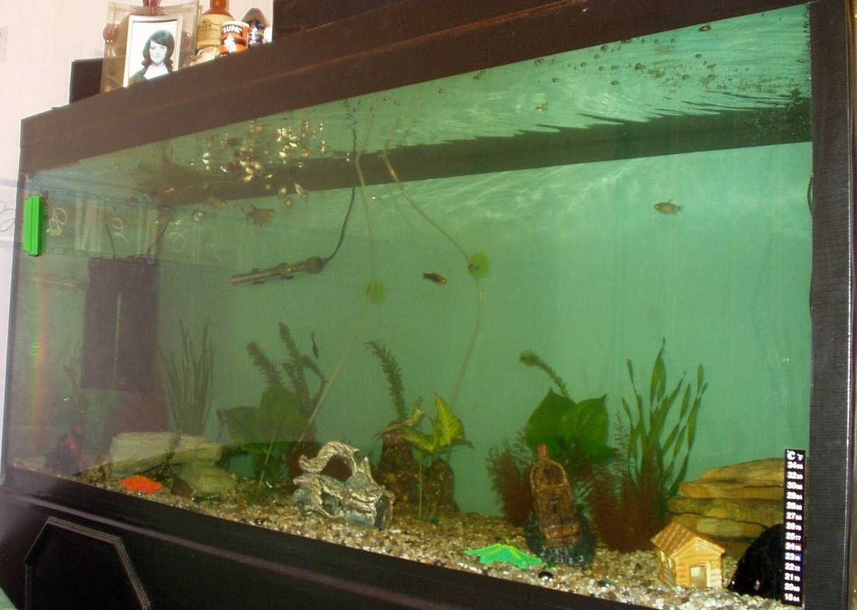 240 gallons freshwater fish tank (mostly fish and non-living decorations) - our 5ft x 2ft x 2ft tank