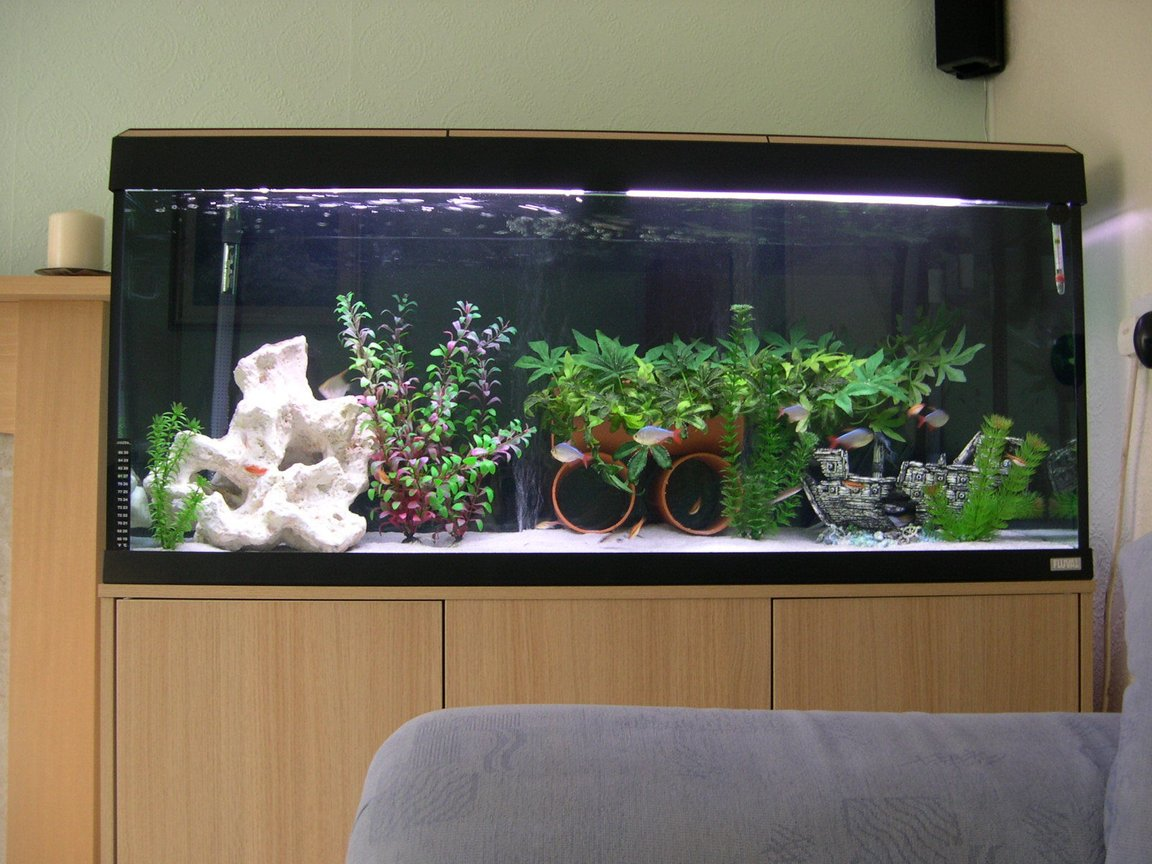 52 gallons freshwater fish tank (mostly fish and non-living decorations) - our freshwater tank