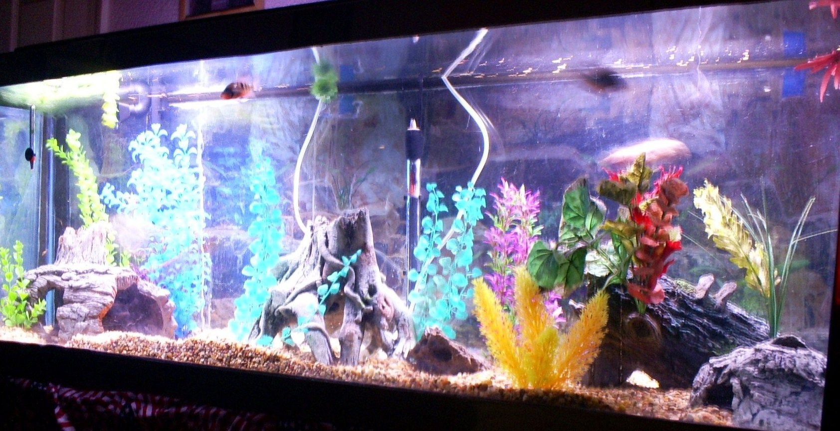 100 gallons freshwater fish tank (mostly fish and non-living decorations) - front