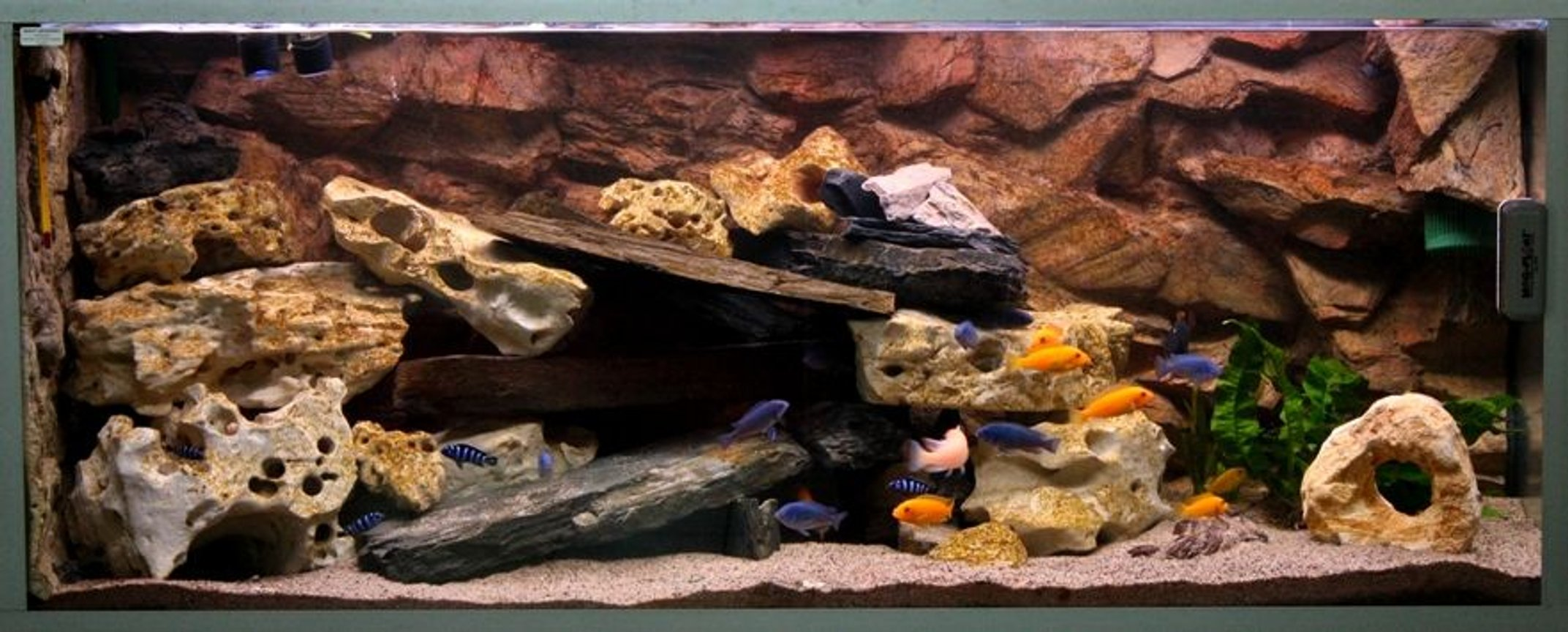 80 gallons freshwater fish tank (mostly fish and non-living decorations) - 2nd edition...