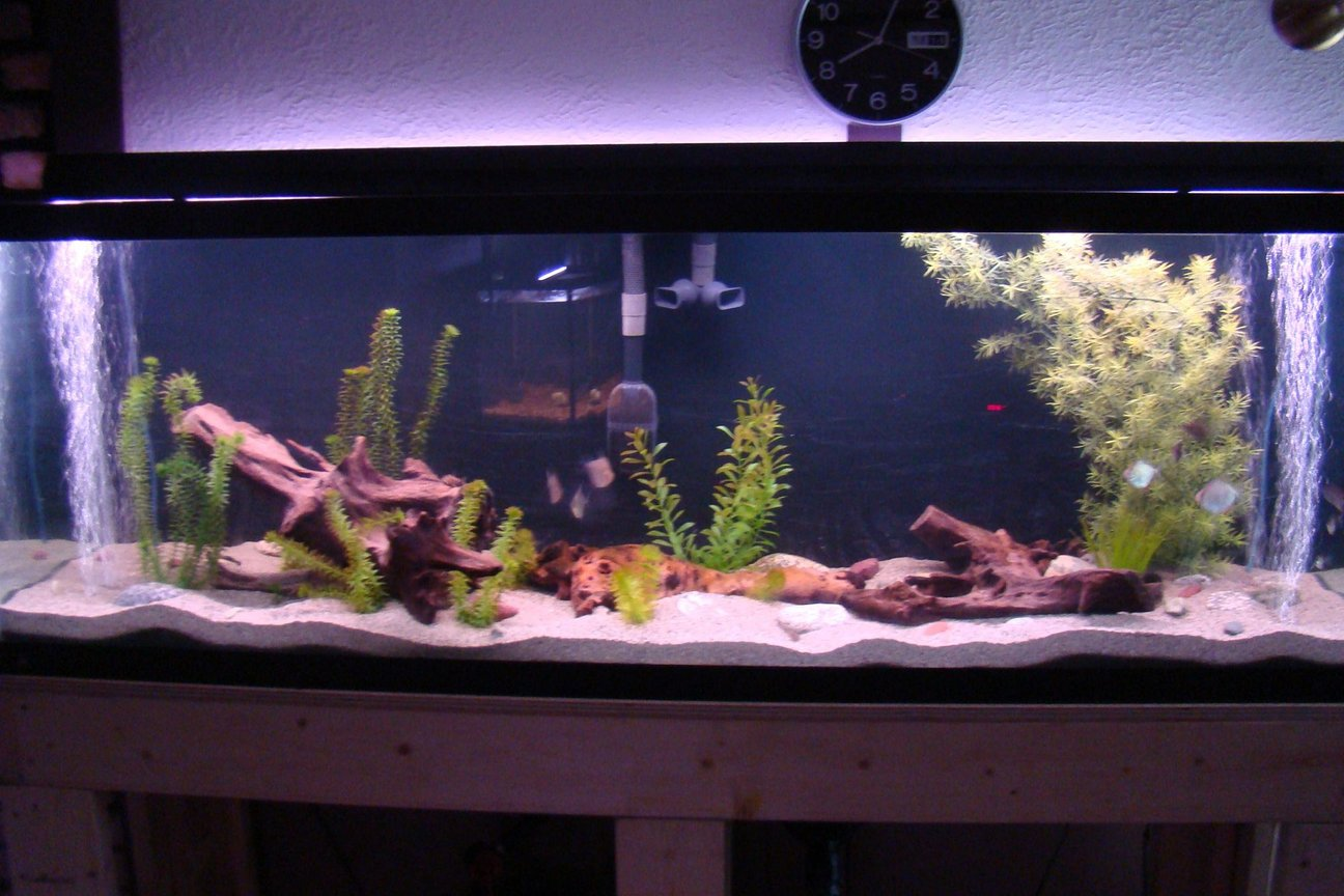 45 gallons freshwater fish tank (mostly fish and non-living decorations) - The 125Gal all set up. 2-300W aquaclear heaters hidden below, see heater module pics. Fluval FX5, Elite optima air. Standard lights, saving up for the good lights for some plants. Love the sand. Went with playsand and wont go back to gravel ever. The corys just seemed to love it right away. Still working on decor, going to go find some hardwood branches to try to make something up to hide the air lines and the intake and exhaust of the pump.