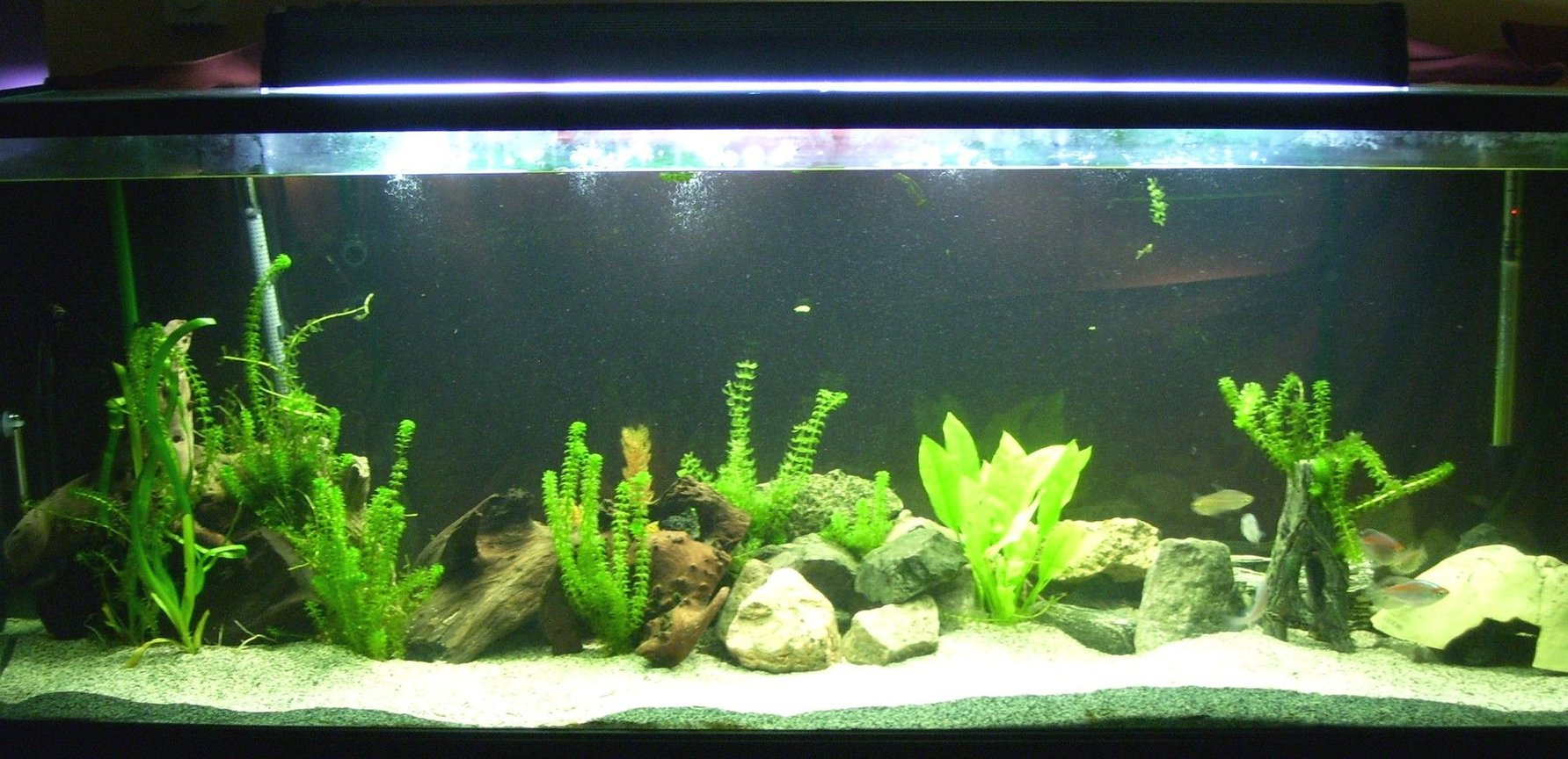 150 gallons freshwater fish tank (mostly fish and non-living decorations) - 150 gallons