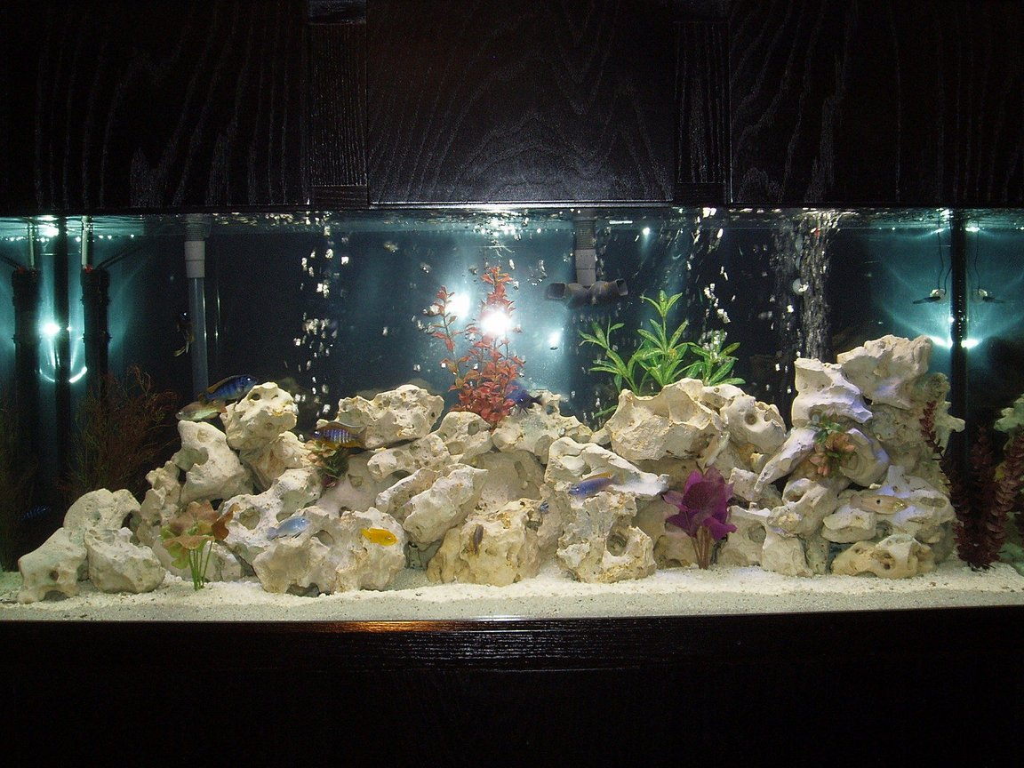 120 gallons freshwater fish tank (mostly fish and non-living decorations) - African Cichlid tank