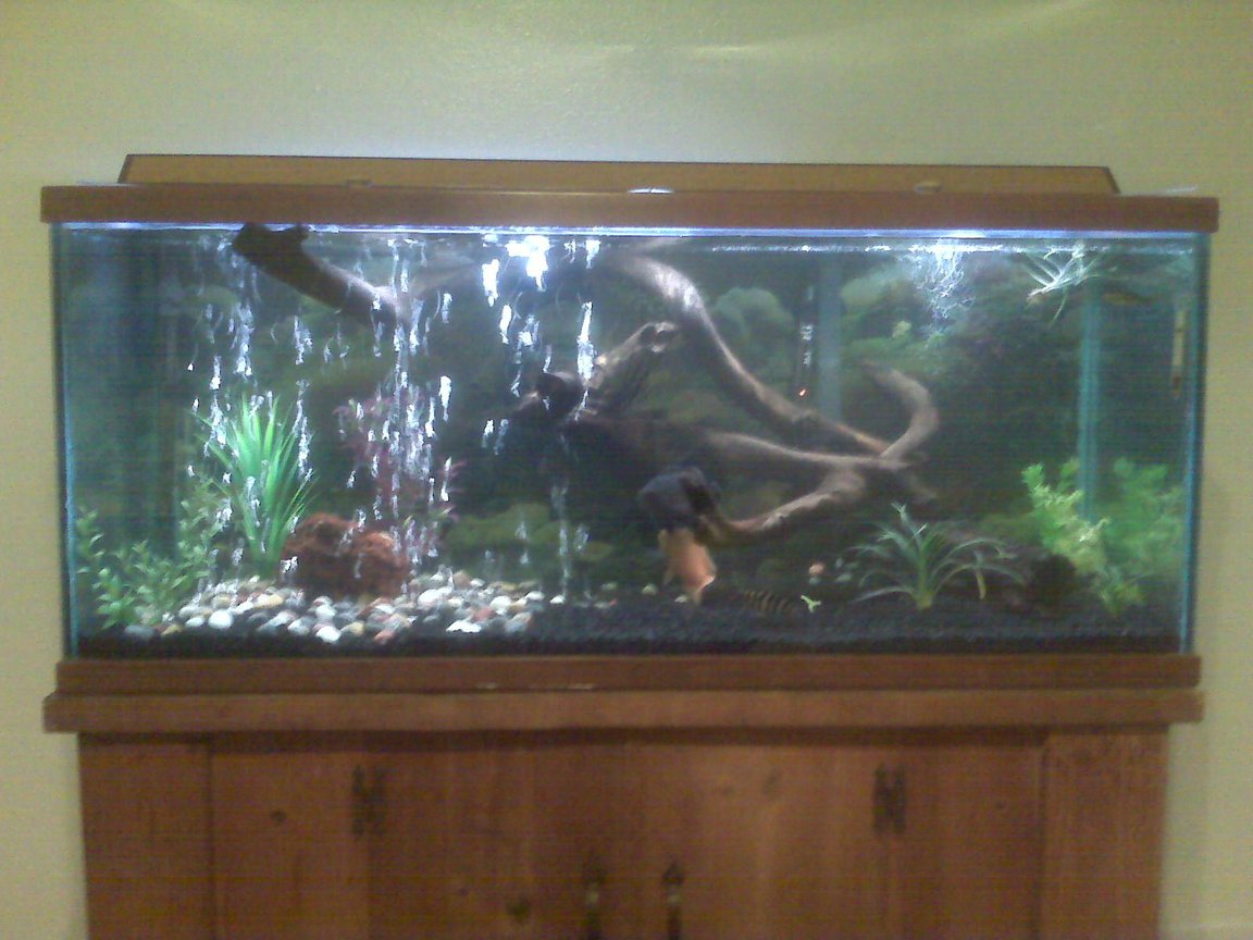75 gallons freshwater fish tank (mostly fish and non-living decorations) - Bad camera phone picture, hope to upload better picture soon.