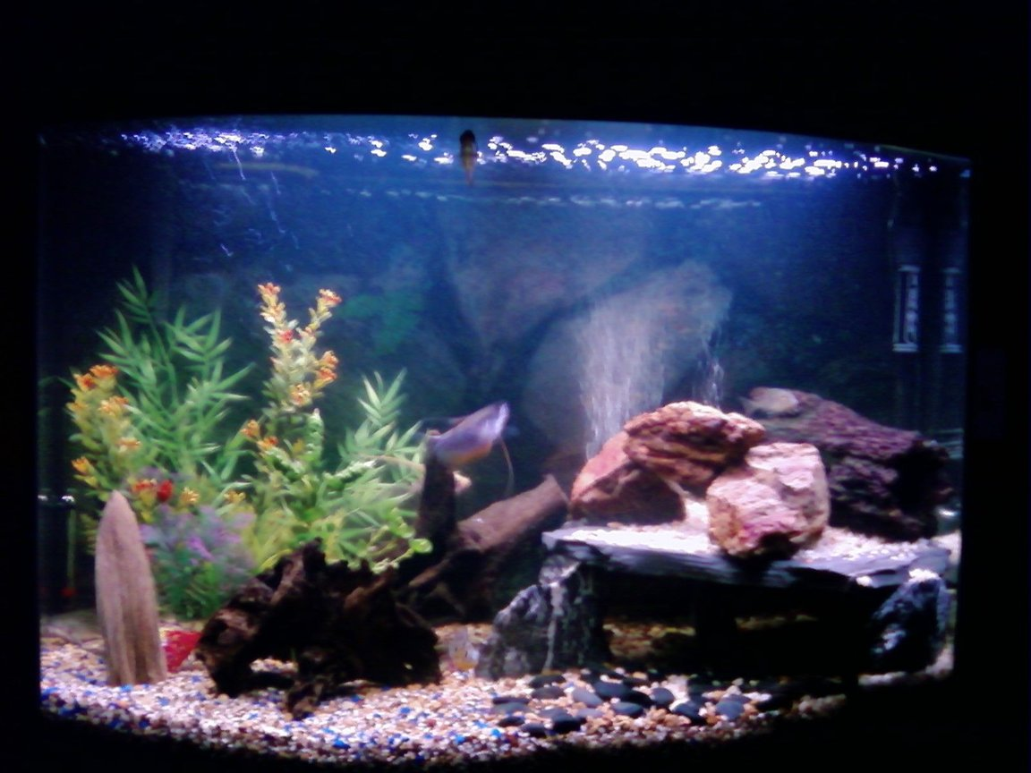 46 gallons freshwater fish tank (mostly fish and non-living decorations) - 46 inch bow front