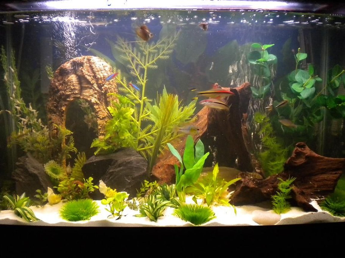 29 gallons freshwater fish tank (mostly fish and non-living decorations) - 29 Gal Community Tank