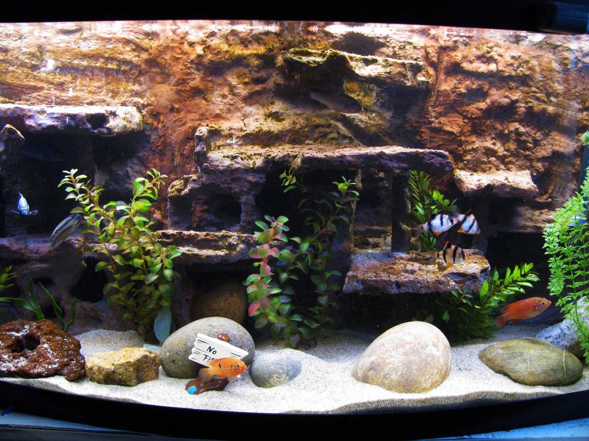 72 gallons freshwater fish tank (mostly fish and non-living decorations) - My fish tank
