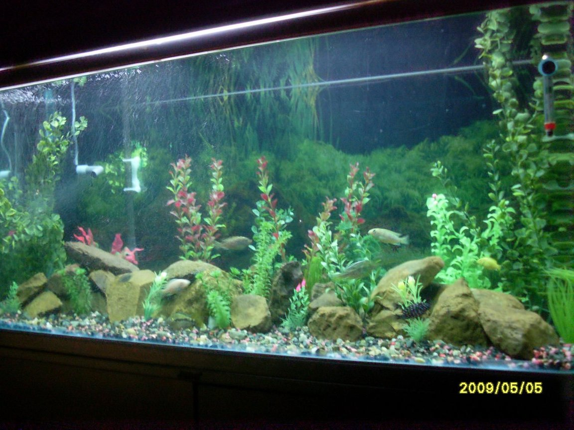 81 gallons freshwater fish tank (mostly fish and non-living decorations) - jebo tank