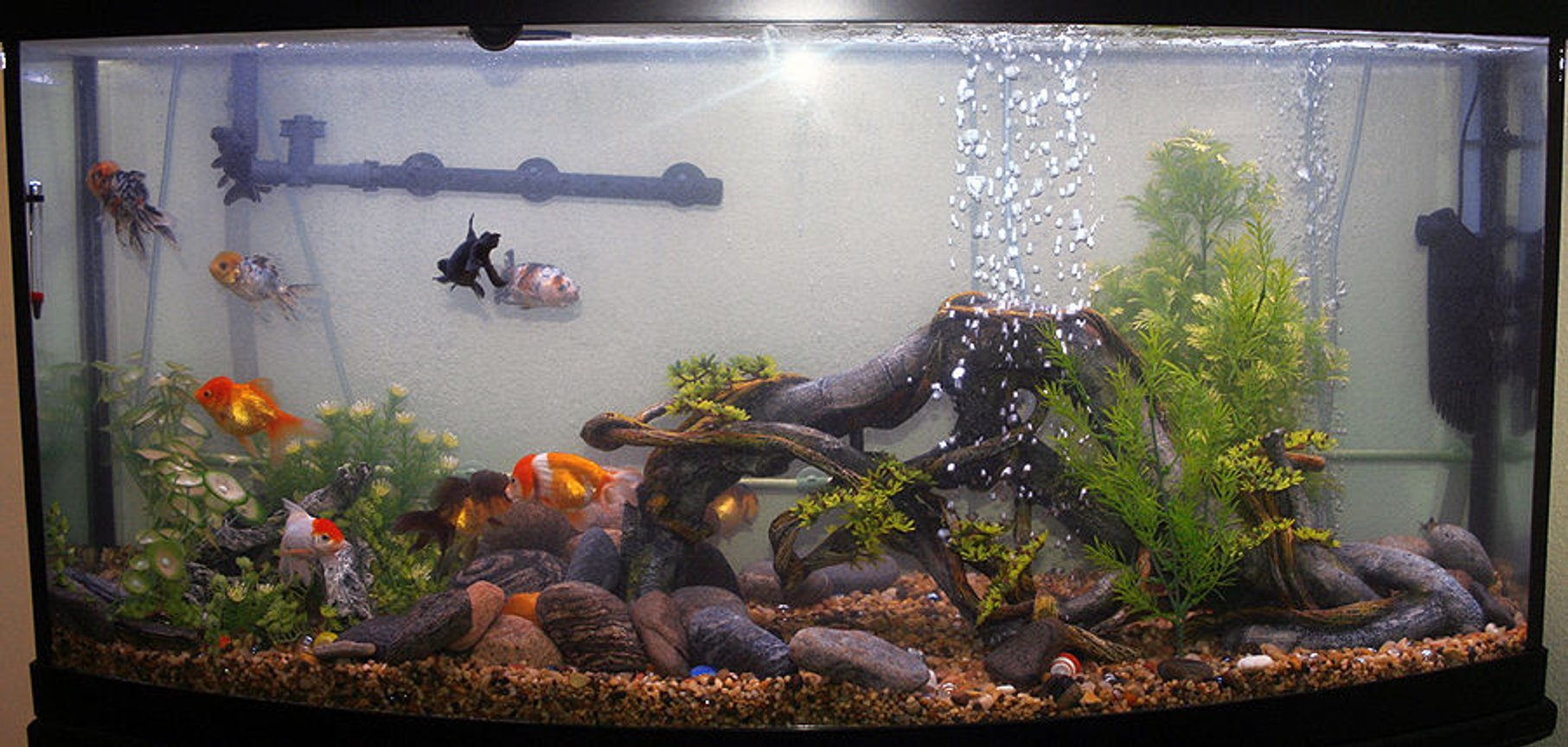 72 gallons freshwater fish tank (mostly fish and non-living decorations) - 72gallon bowfront goldfish tank
