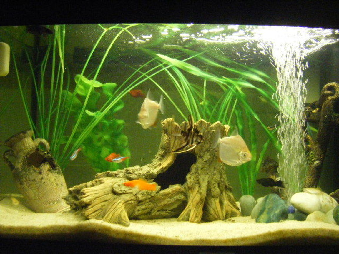 12 gallons freshwater fish tank (mostly fish and non-living decorations) - 2 Silver Dollars, 4 danios,2 Penguin Tetra, 7 Neons, 2 Platy's, 1Male Siamese Fighter, 1 Female Fighting Fish, 1 Ghost Knife-fish, 2 Mollies, 1 Angel Fish and one weird orange thing ! :S