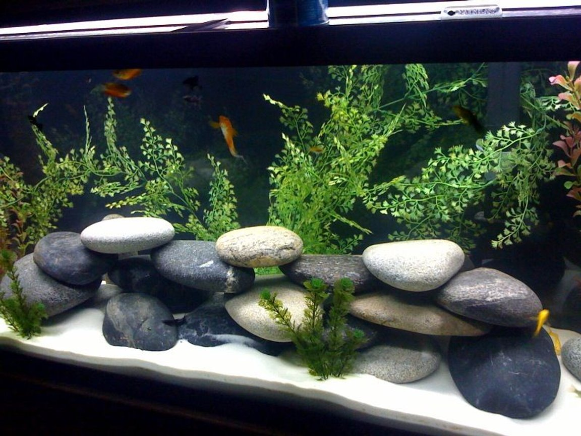 55 gallons freshwater fish tank (mostly fish and non-living decorations) - New Theme, comment away...Switching to Africian cichlids soon. Gotta get that ph up. =)