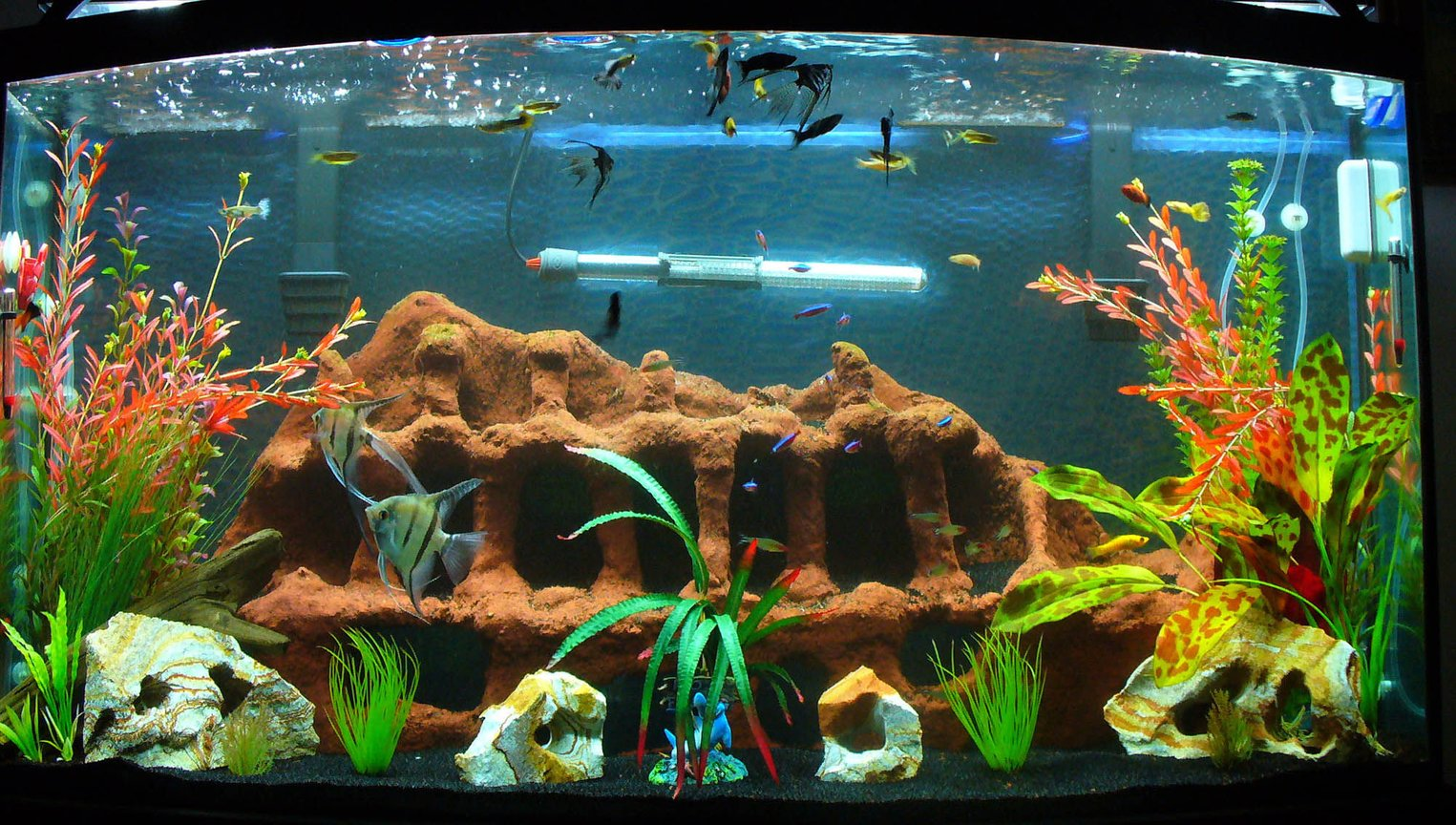 80 gallons freshwater fish tank (mostly fish and non-living decorations) - This is the latest and greatest of the 80 pics. I move things around and added some tall fake plants.