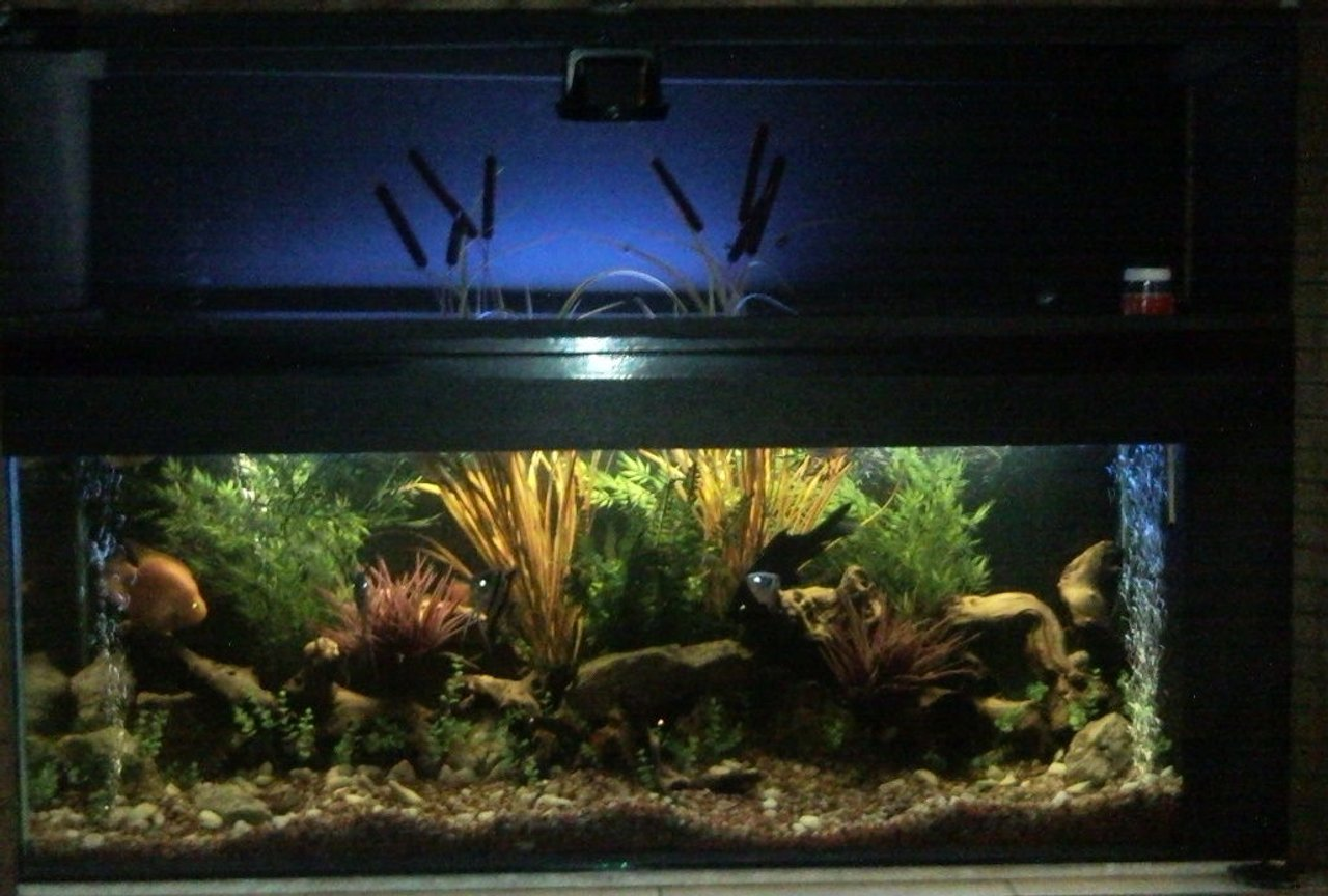 100 gallons freshwater fish tank (mostly fish and non-living decorations) - 1.5 m outdoor archer tank