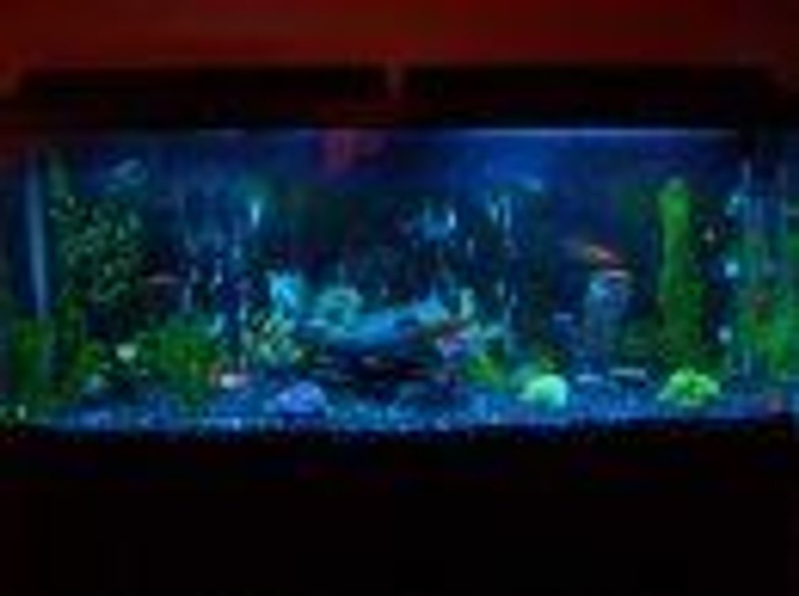 55 gallons freshwater fish tank (mostly fish and non-living decorations) - Fresh water, multiple fish types, artificial decorations