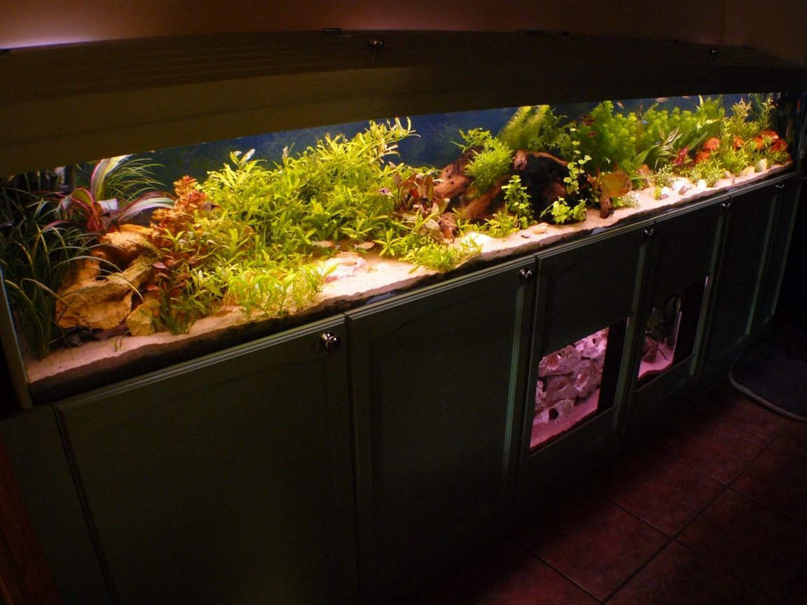 90 gallons freshwater fish tank (mostly fish and non-living decorations) - A different angle shot of the main tank.
