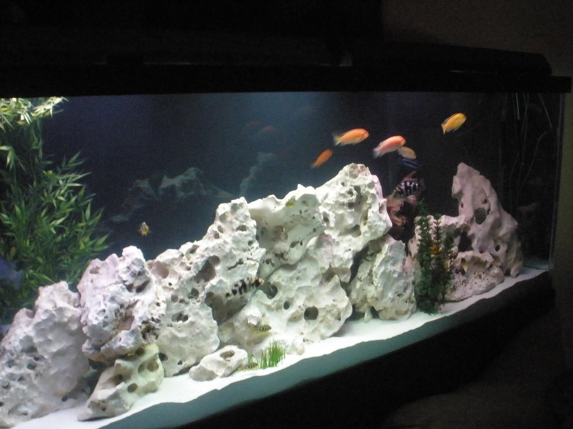 160 gallons freshwater fish tank (mostly fish and non-living decorations) - With our Fish in it