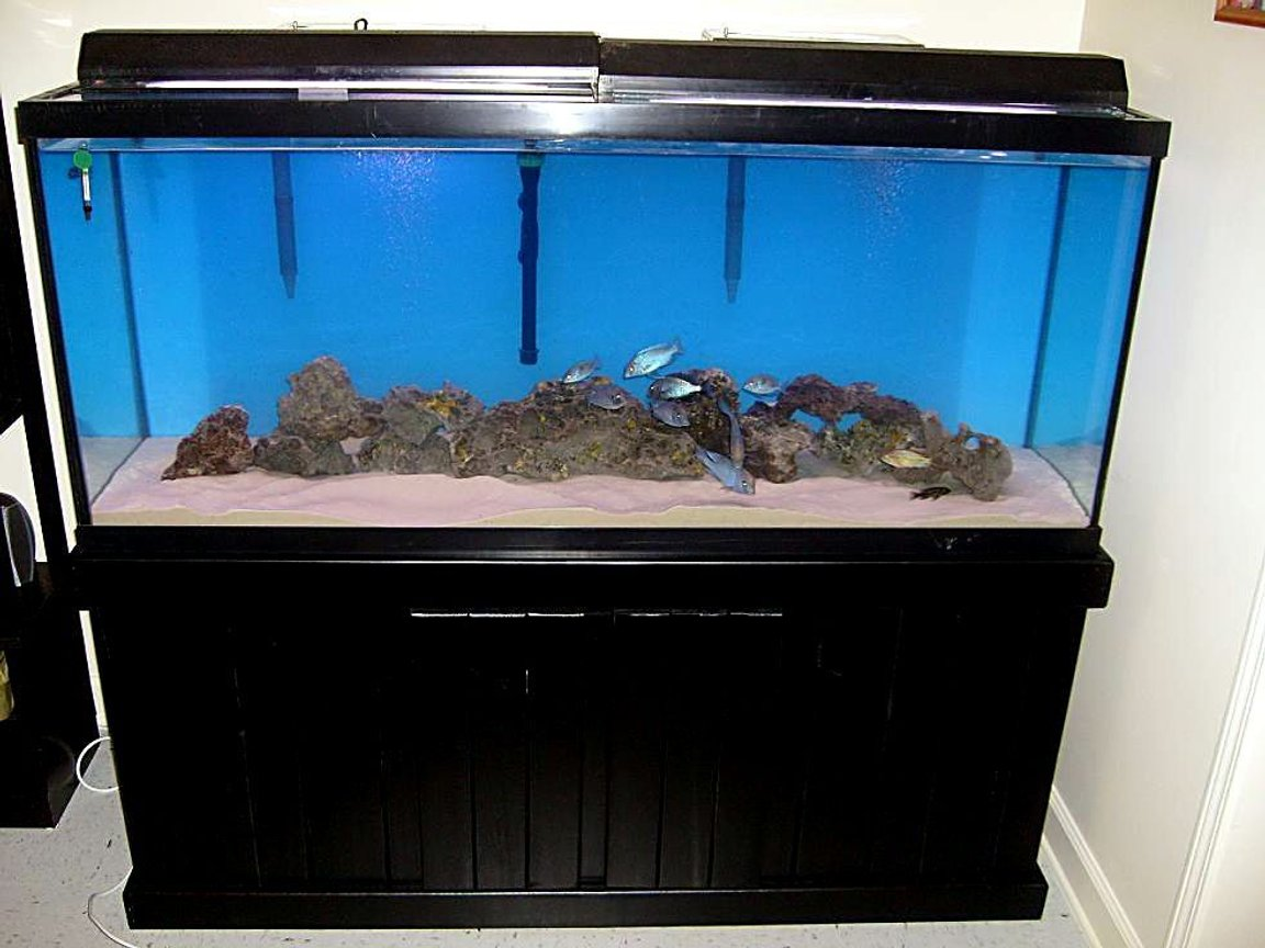 120 gallons freshwater fish tank (mostly fish and non-living decorations) - 120 tall, with malawis