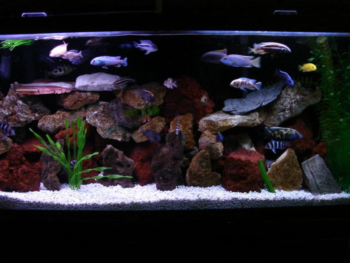 55 gallons freshwater fish tank (mostly fish and non-living decorations) - DIFFERENT LOOK