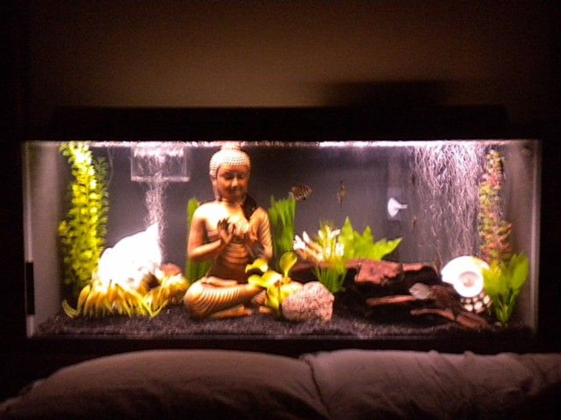 75 gallons freshwater fish tank (mostly fish and non-living decorations) - My 75 gallon brackish water tank.