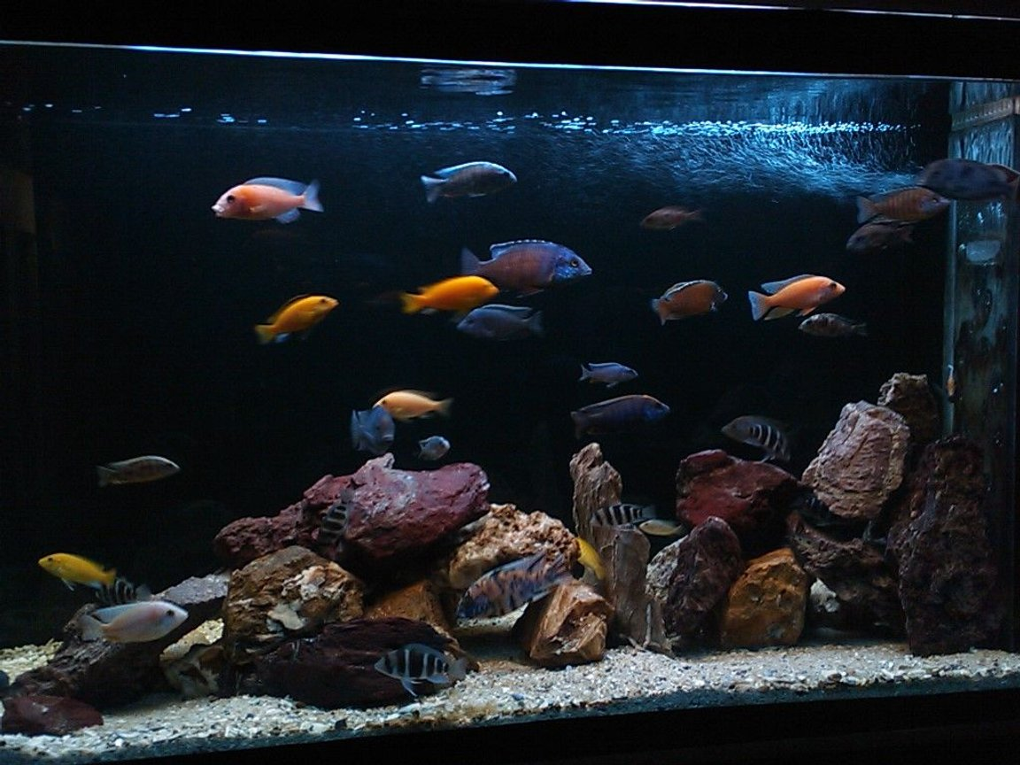 185 gallons freshwater fish tank (mostly fish and non-living decorations) - more angles