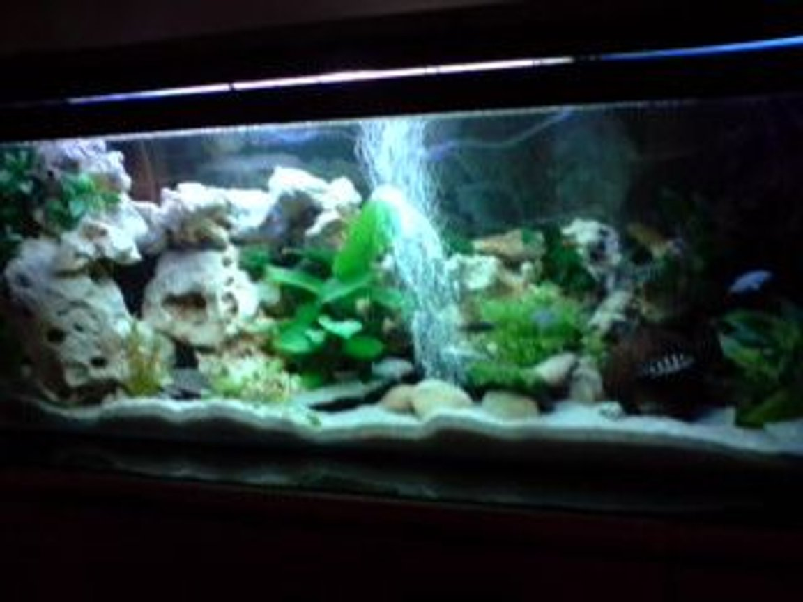 52 gallons freshwater fish tank (mostly fish and non-living decorations) - small version malawi cichlids lake in my home ;)