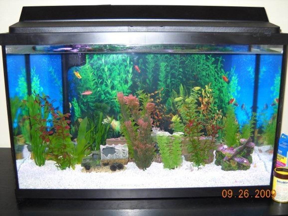 29 gallons freshwater fish tank (mostly fish and non-living decorations) - white gravel, plastic plants except for one. WWII decor [a sunken plane, truck, submarine, and aircraft carrier. 4 glofish, 4 zebra danios, one betta fish, and 2 panda cories. thinking about getting a snail.
