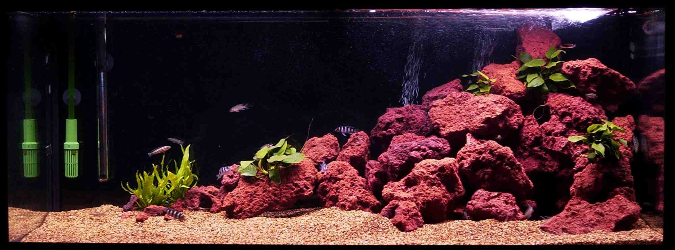 72 gallons freshwater fish tank (mostly fish and non-living decorations) - This is my Tang tank... poor picture will upload a better one soon... :)