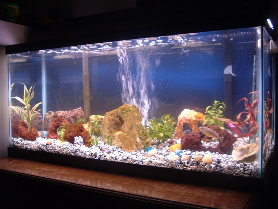 30 gallons freshwater fish tank (mostly fish and non-living decorations) - 02-28-06