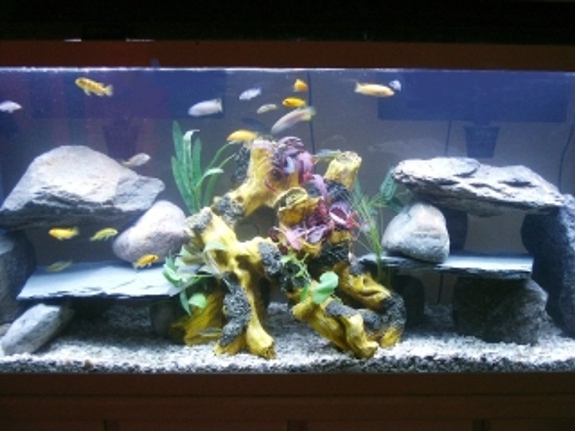 55 gallons freshwater fish tank (mostly fish and non-living decorations) - assorted africans