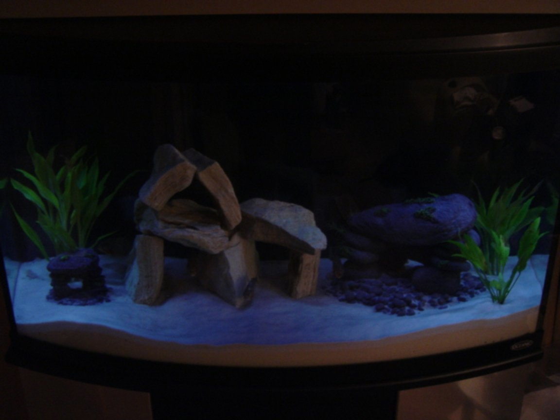 46 gallons freshwater fish tank (mostly fish and non-living decorations) - 46 Gal Bowfront.