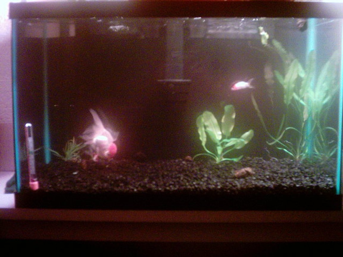 10 gallons freshwater fish tank (mostly fish and non-living decorations) - This picture is taken with a reallyy bad camera. My girlfriend got it for christmas 5 years ago. We're just beginners!!