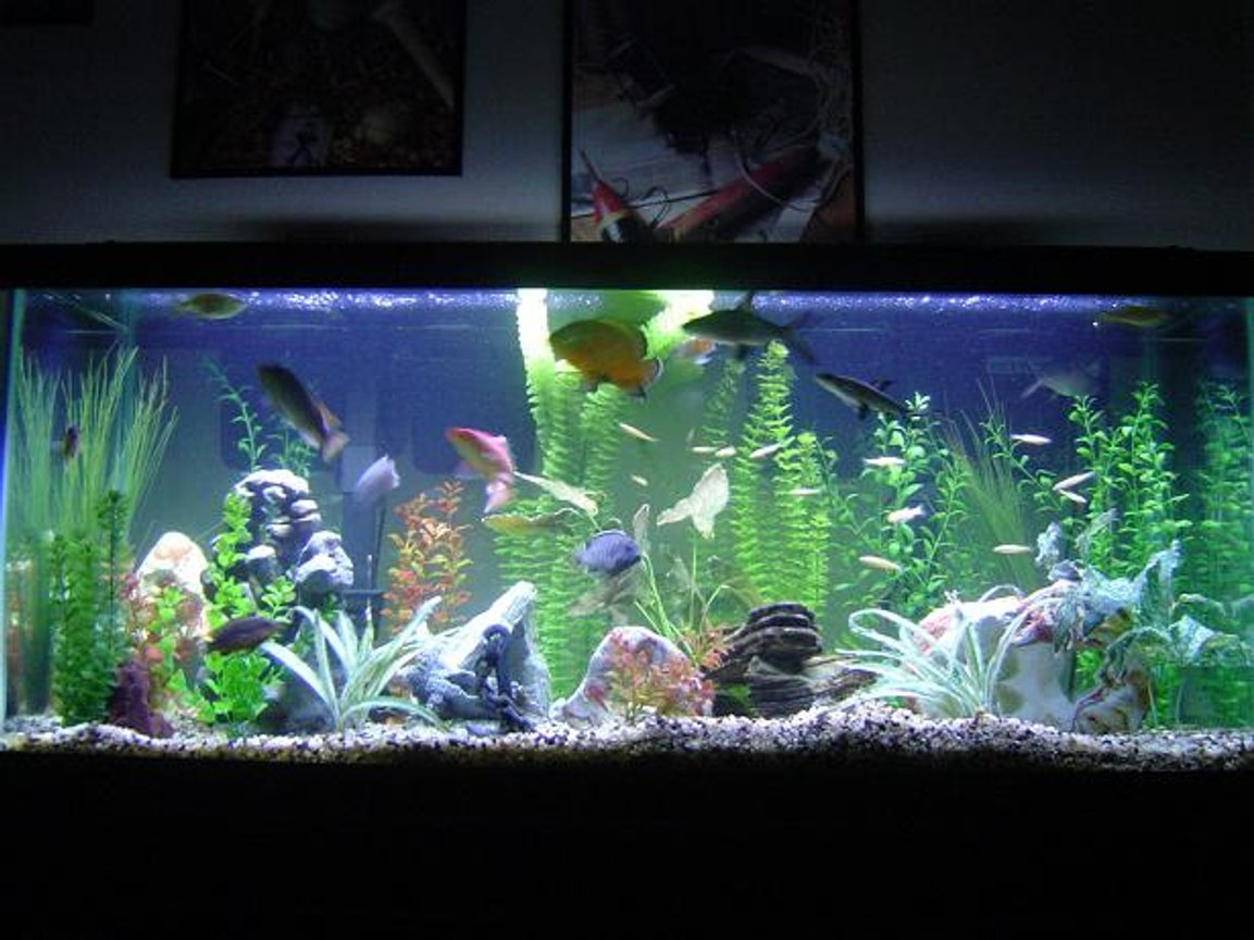 75 gallons freshwater fish tank (mostly fish and non-living decorations) - I have 1 oscar, 6 cichlids, 2 pelcos, 3 bala sharks, 1 crayfish, 20 feeder fish