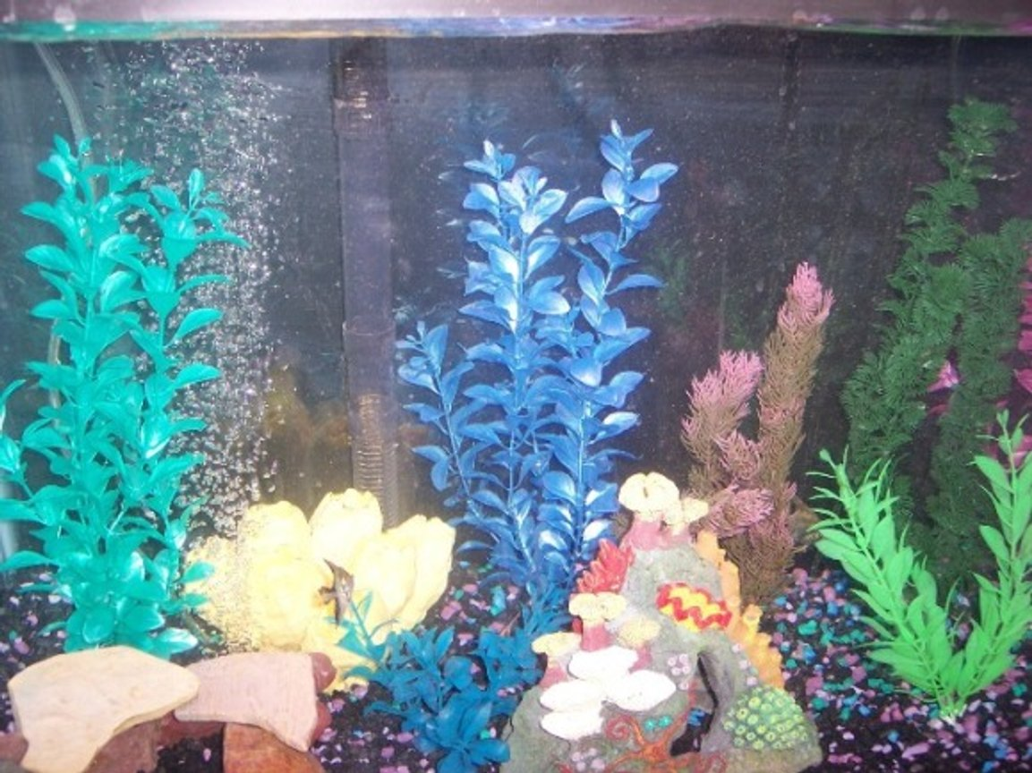 29 gallons freshwater fish tank (mostly fish and non-living decorations) - my tank